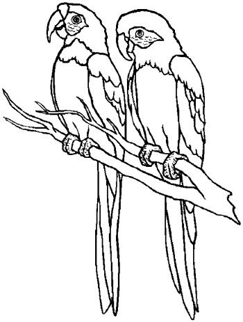 Bird Outline Drawing at GetDrawingscom Free for personal use Bird