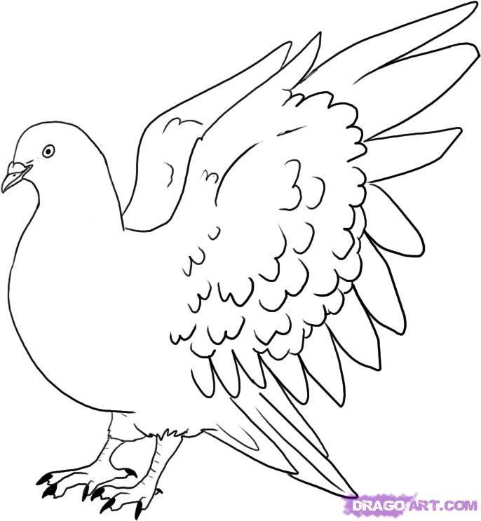 686x743 Drawn Pidgeons Pencil Drawing