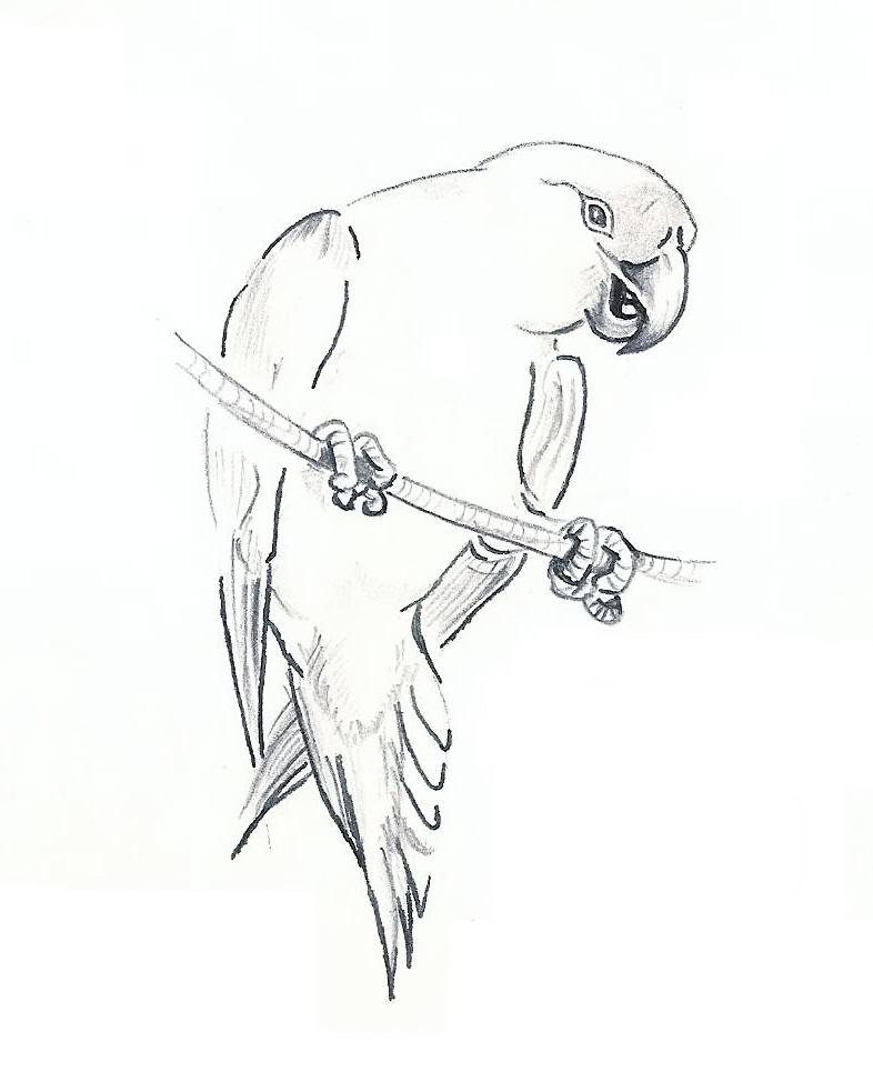 786x983 Parrot