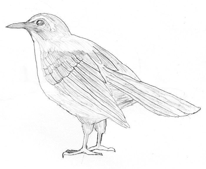 700x575 Pencil Sketch