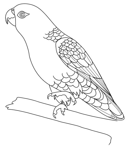 521x599 Pencil Sketches And Drawings How To Draw A Parrot
