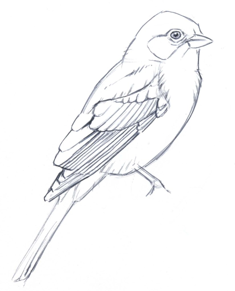 825x1024 Simplifying Bird Plumage