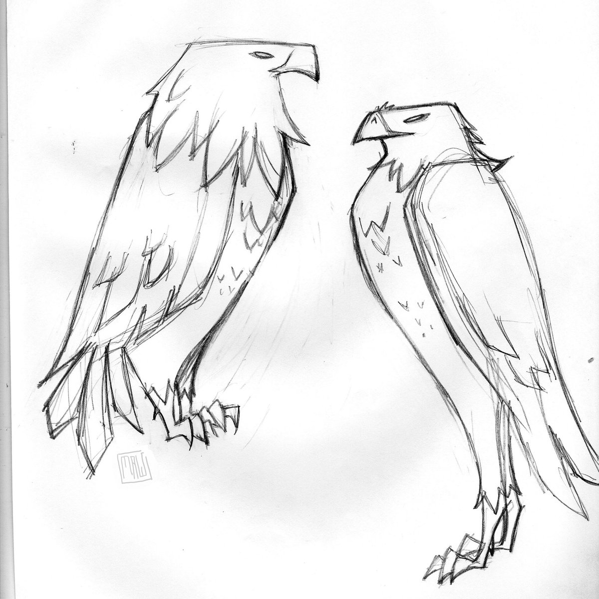 1200x1200 Taylor Maw On Twitter Quick Bird Sketches From Tracy Aviary. My