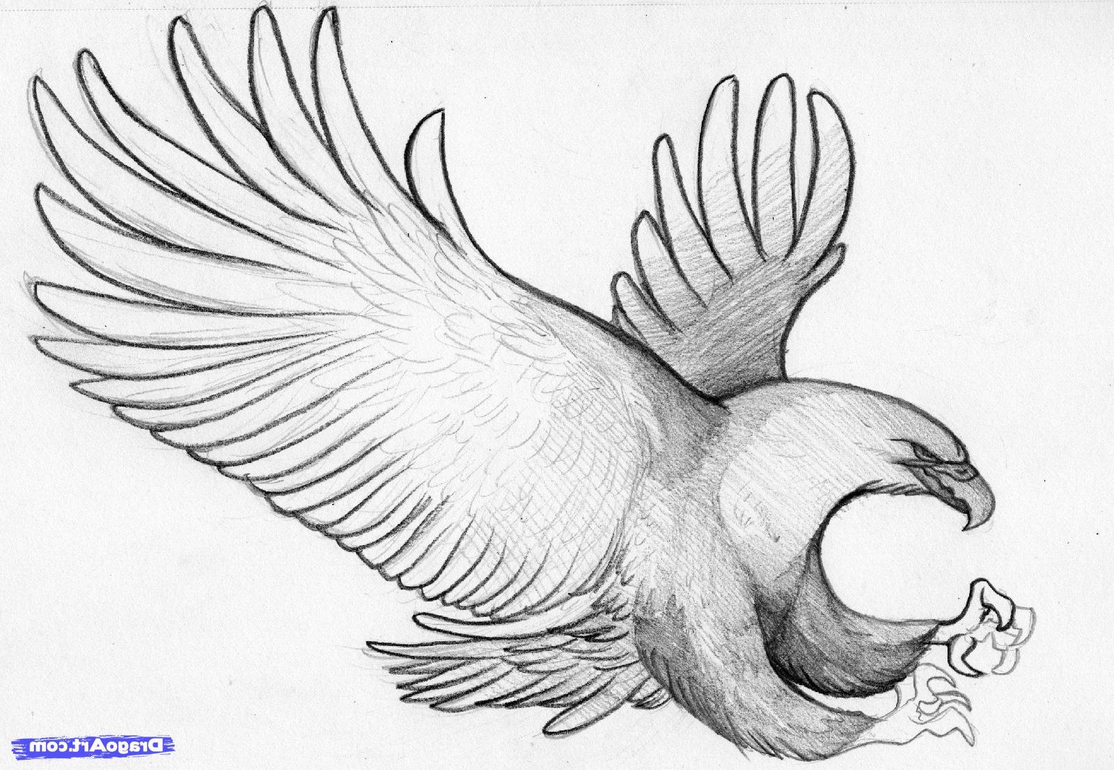 1600x1106 Birds Pencil Painting Images Pencil Drawings Pencil Drawings