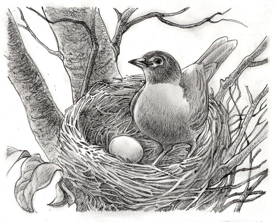 900x727 Some Bird Drawings Life Needs Art
