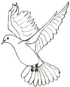 236x292 Flying Dove Pencil Drawing