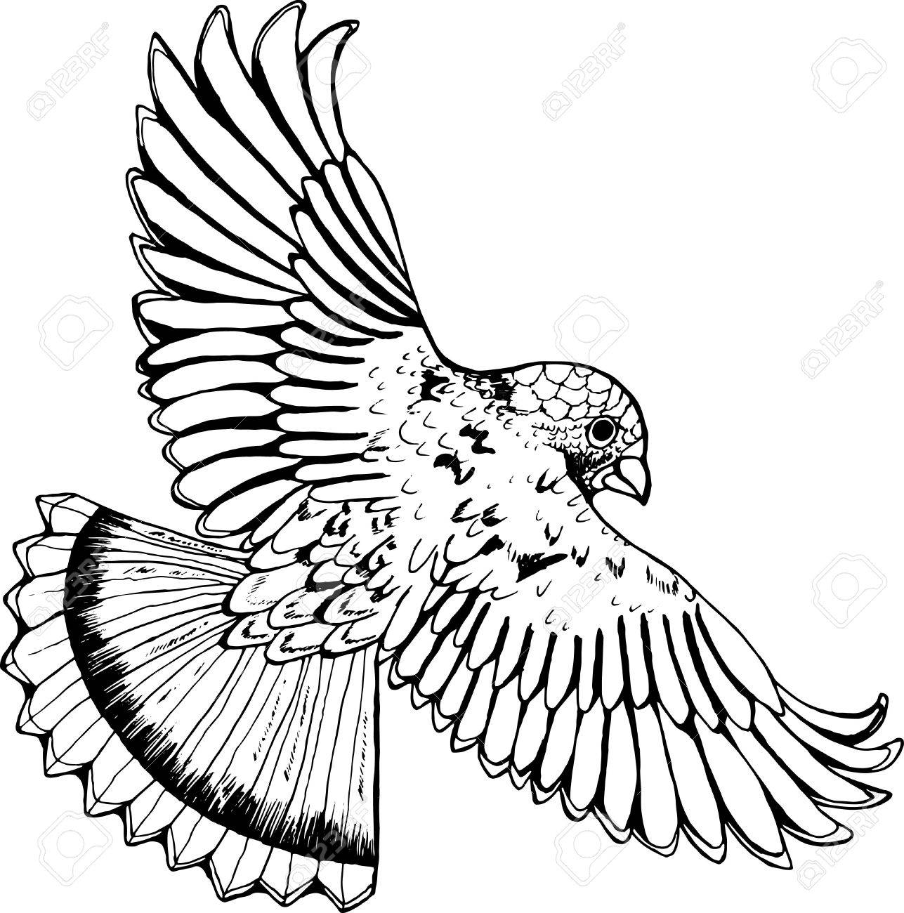1287x1300 Black And White Drawing Of An Eagle. Bird In Flight Royalty Free