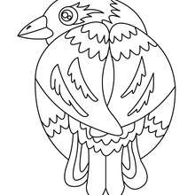 220x220 Bird Sitting On A Branch Coloring Pages