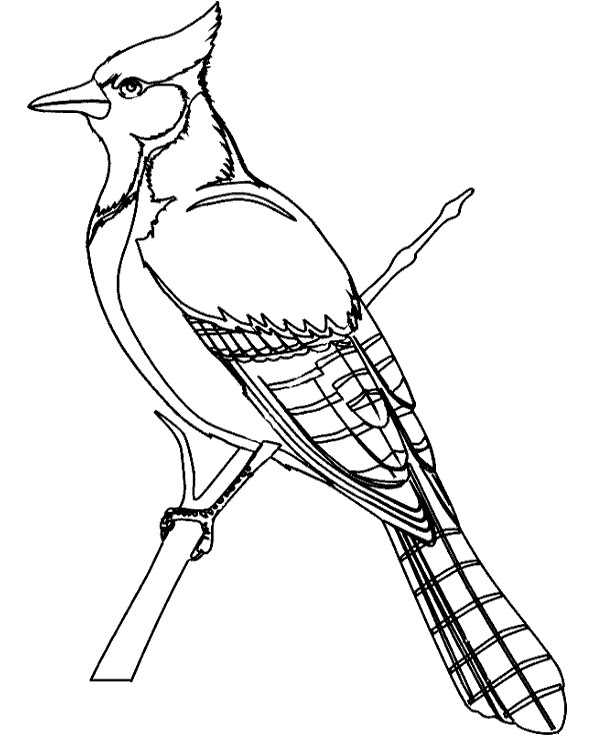 600x740 Birds Coloring Books 19 To Print Or Download For Free