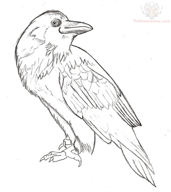 600x670 Collection Of Crow On Branch With Key Tattoo Design