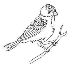 Bird Sitting On A Branch Drawing