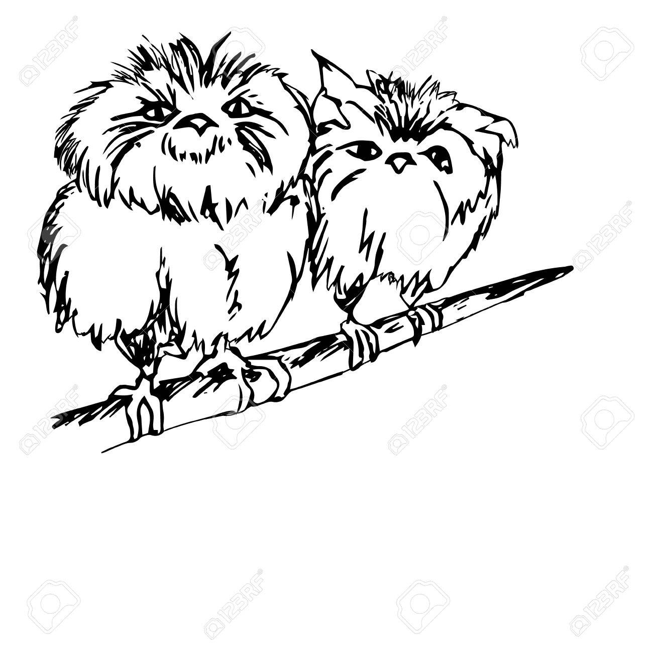 1300x1300 Graphic Image Of An Owl, Two Birds. Two Chicks Sitting On A Branch