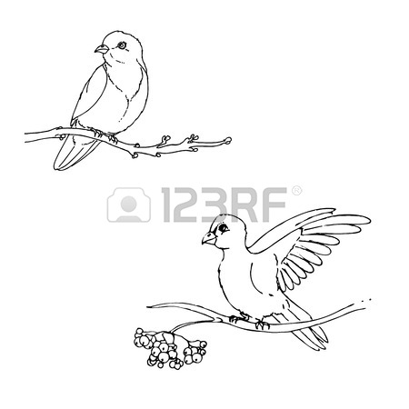 450x450 Hand Drawn Vector Illustration Of Doodle Bird Sitting On Branch