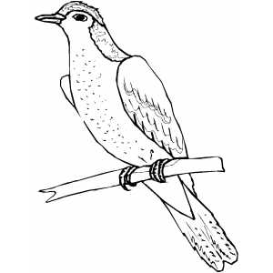 300x300 Sitting On Branch Coloring Sheet