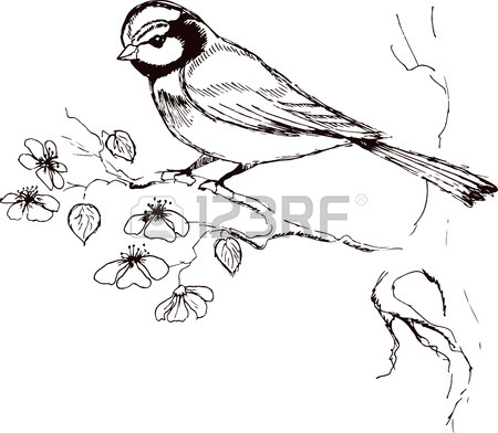 450x392 Sketch Of Titmouse Bird Sitting On A Flowering Branch. Vector