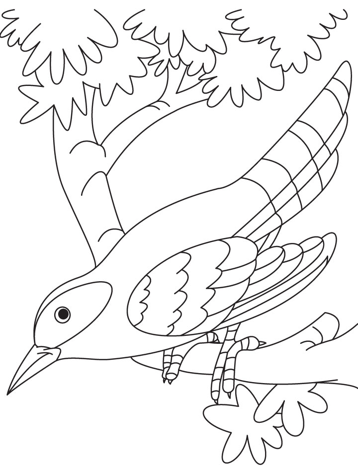 720x954 Cuckoo Bird Sitting On Branch Coloring Page Download Free