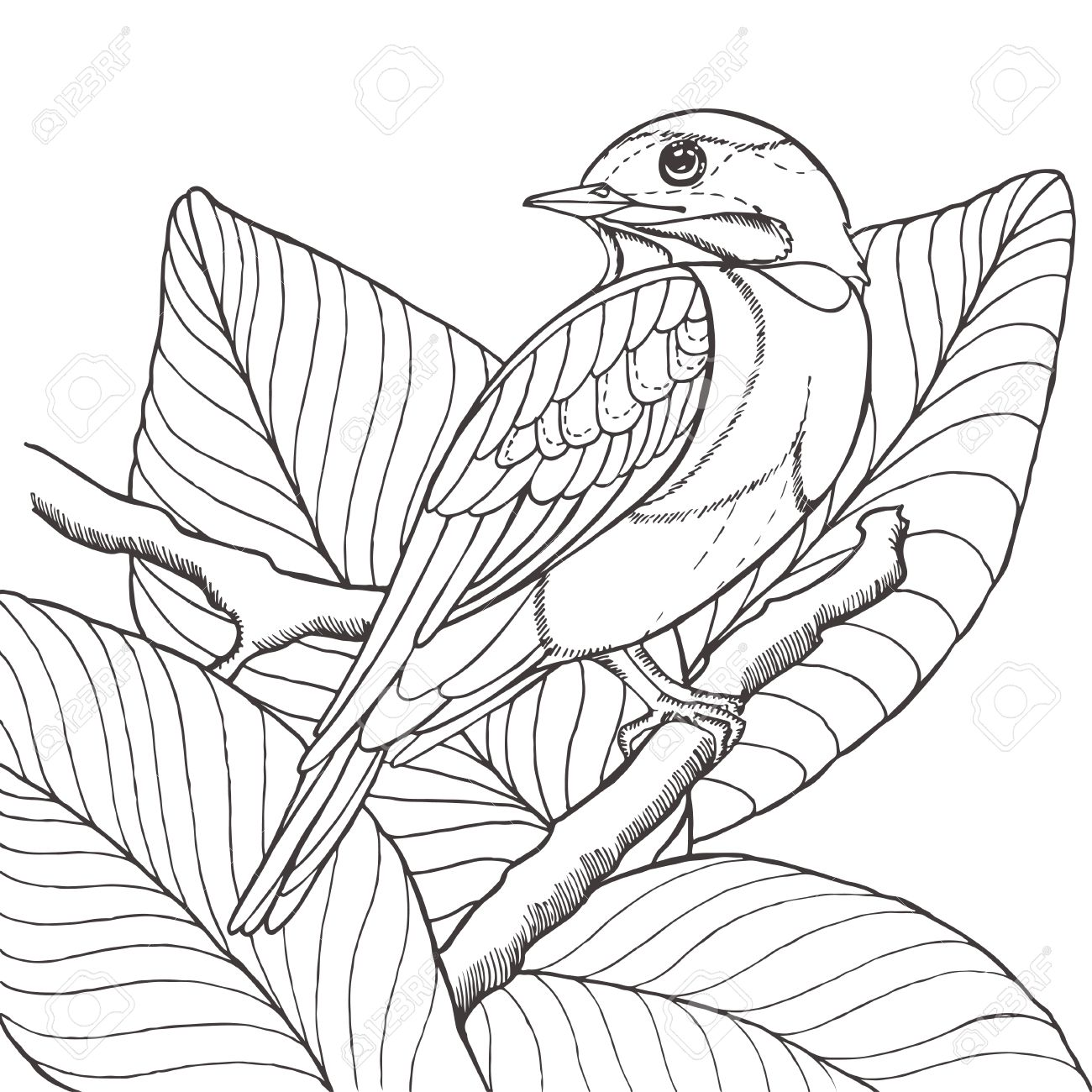1300x1300 Sketch Of Tropical Bird Sitting On Branch In Leaves. Imitation