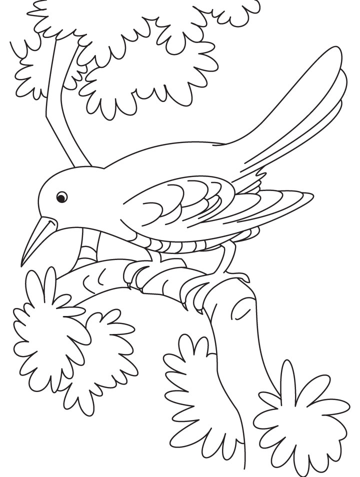 720x954 Sad Cuckoo Bird Sitting On A Branch Coloring Page Download Free