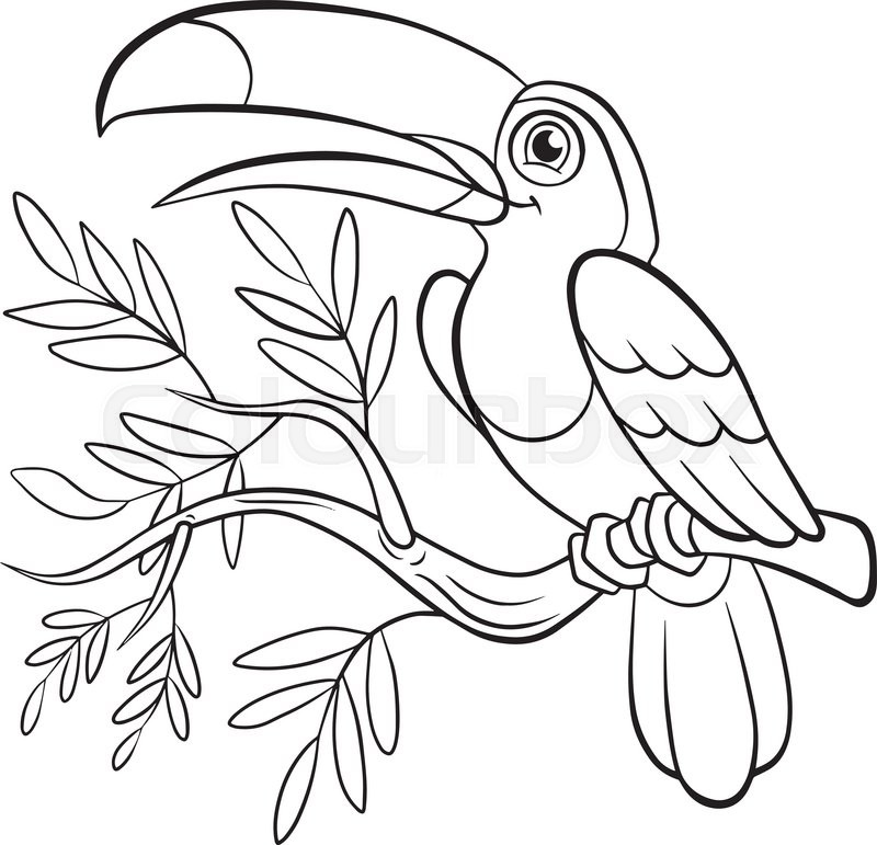800x771 Coloring Pages. Birds. Little Cute Toucan Sits On The Tree Banch