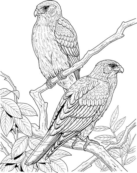 474x597 Falcon On The Tree Bird Coloring Pages