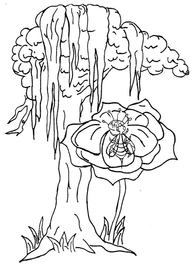 638x878 Magnolia Tree Coloring Page Magnolia Tree Flowers