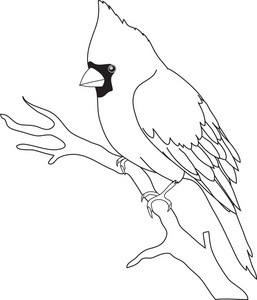 257x300 Parrot Clipart Tree Drawing