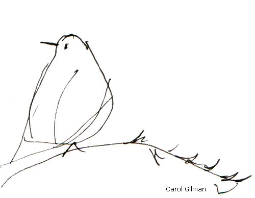 500x388 Lady Robin Is Bird Watching