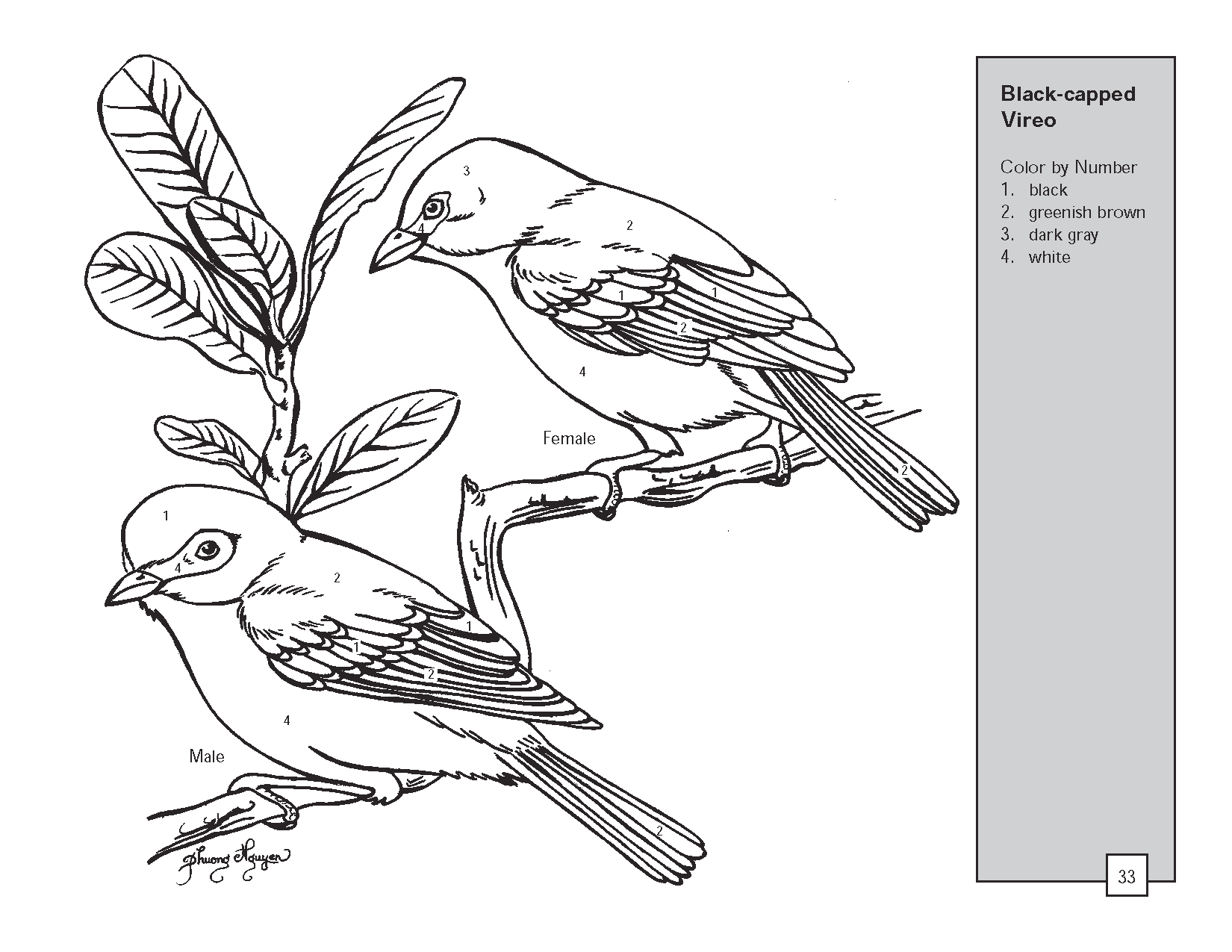 1650x1275 Realistic Bird Coloring Pages Texas Vireo Bird Color By Number