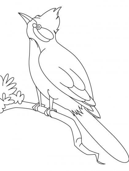 420x556 Nightingale Bird Watching Coloring Page Download Free