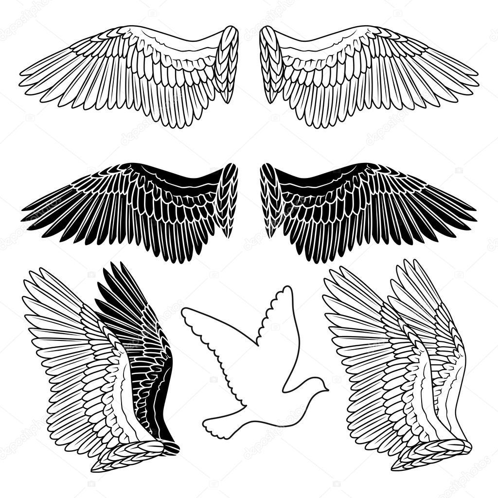 1024x1024 Dove Bird Wings Set Stock Vector Arlatis