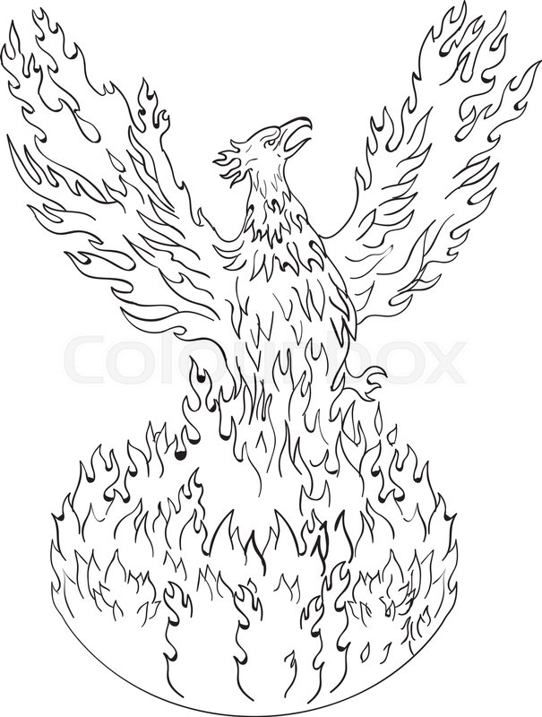 605x800 Drawing Sketch Style Illustration Of A Phoenix Rising Up