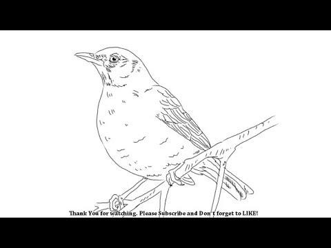 480x360 How To Draw A Bird Yzarts Yzarts