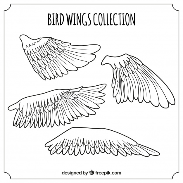 626x626 Pack Of Bird Wings Vector Free Download