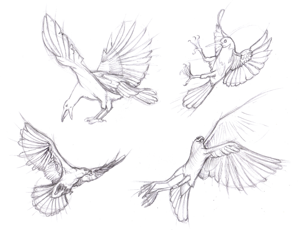 1000x769 How To Draw Bird Wings