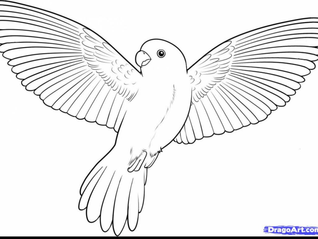 1024x768 Bird Coloring Pages Clipart For Kids Printable Page Of Birds Free