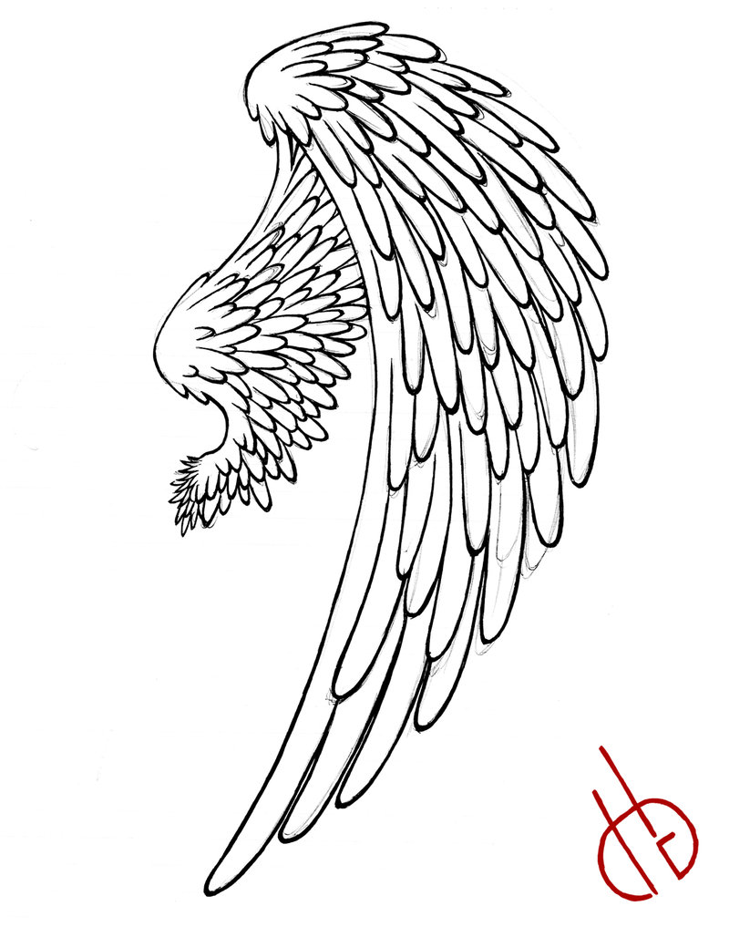 800x1028 Bird Wing By Di Gon