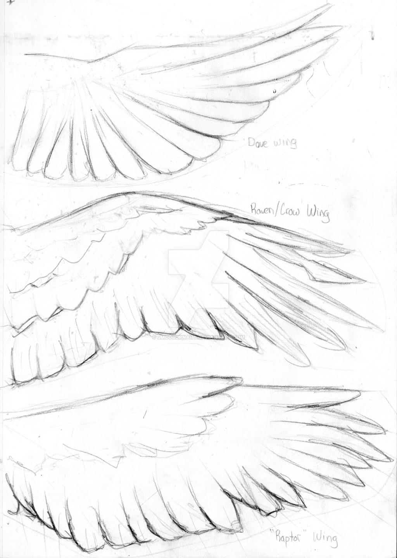 1024x1440 Bird Wings Practice By Jmcoburnart