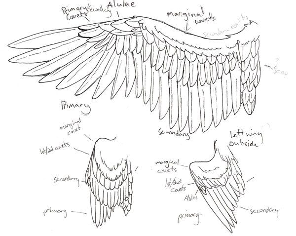 Bird Wings Drawing at GetDrawings.com | Free for personal use Bird ...