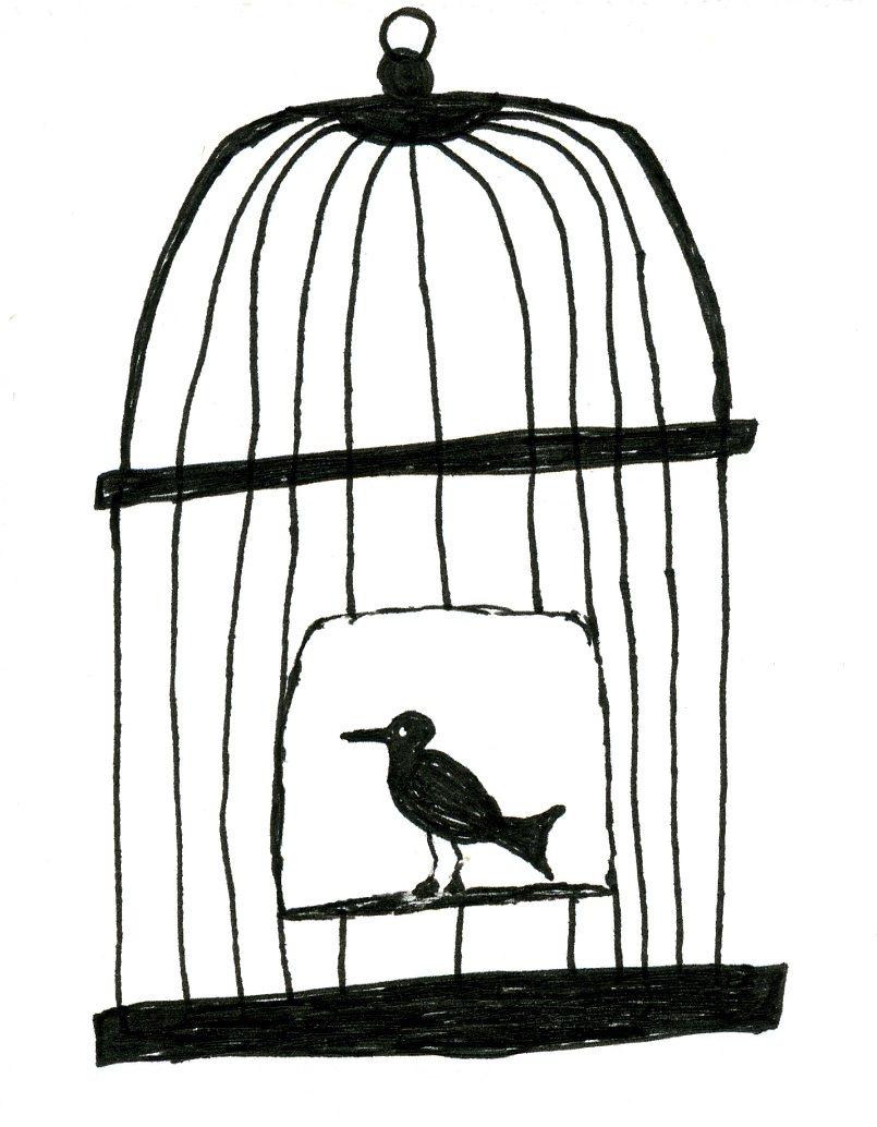 805x1034 Open Bird Cage Sketch