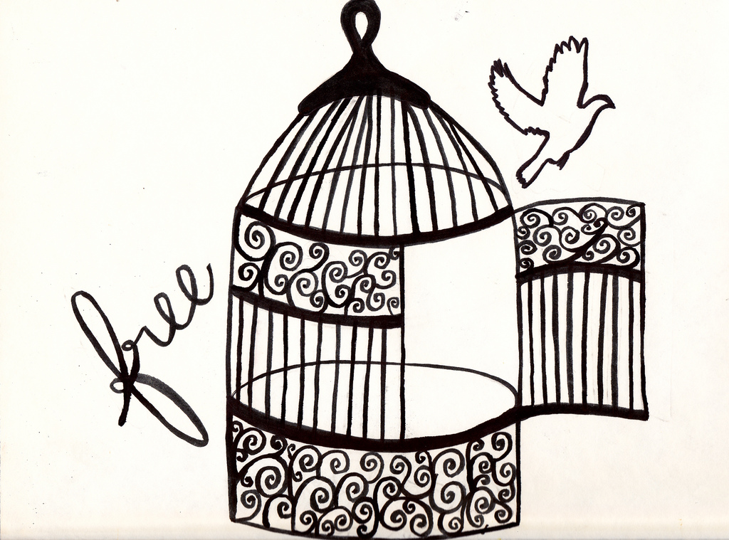 1024x759 The World's Most Recently Posted Photos Of Birdcage And Freedom