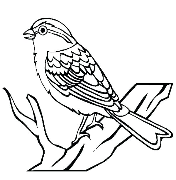600x614 Coloring Page Of A Bird Chipping Sparrow Bird Coloring Page Bird