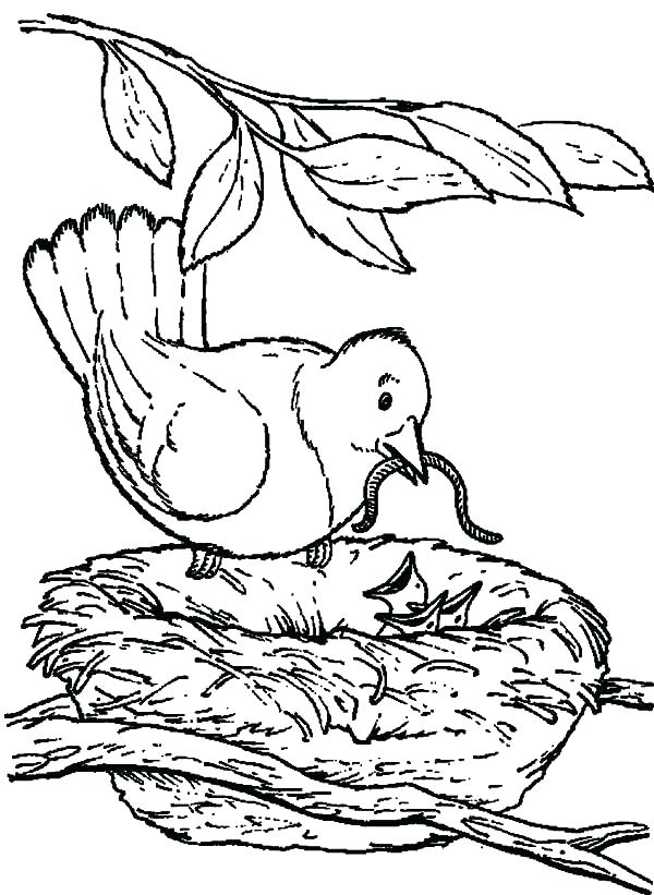 600x821 Coloring Page Of A Bird Group Angry Birds