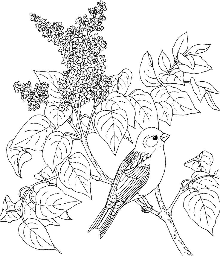 Birds And Flowers Drawing