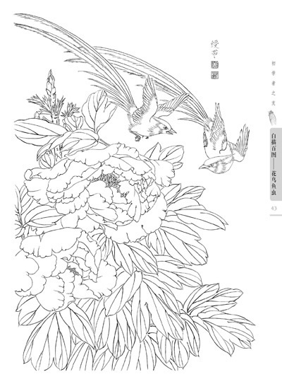 400x543 Chinese Line Drawing Flowers, Birds, Fishes And Insects Painting
