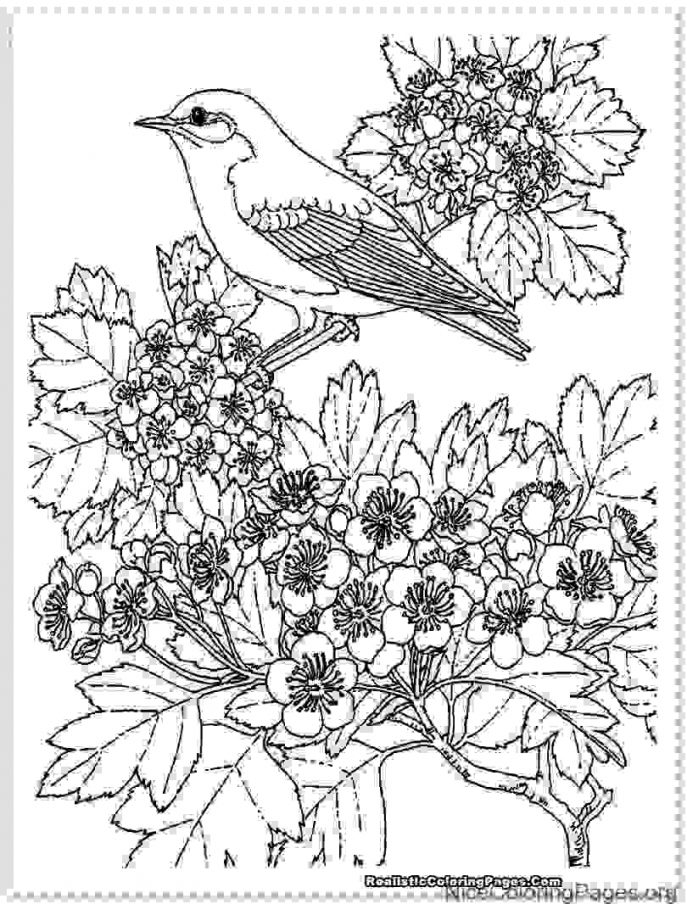687x904 Coloring Stock Vectoroloring Book Page Of Swan Birds Family