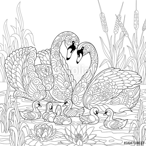 500x500 Coloring Book Page Of Swan Birds Family, Lotus Flowers And Reed