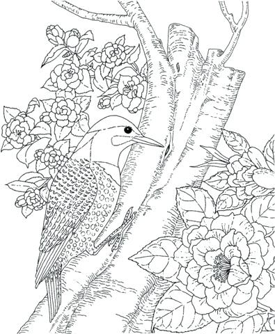 395x480 Coloring Pages Bird Angry Birds Space Coloring Pages Printable How