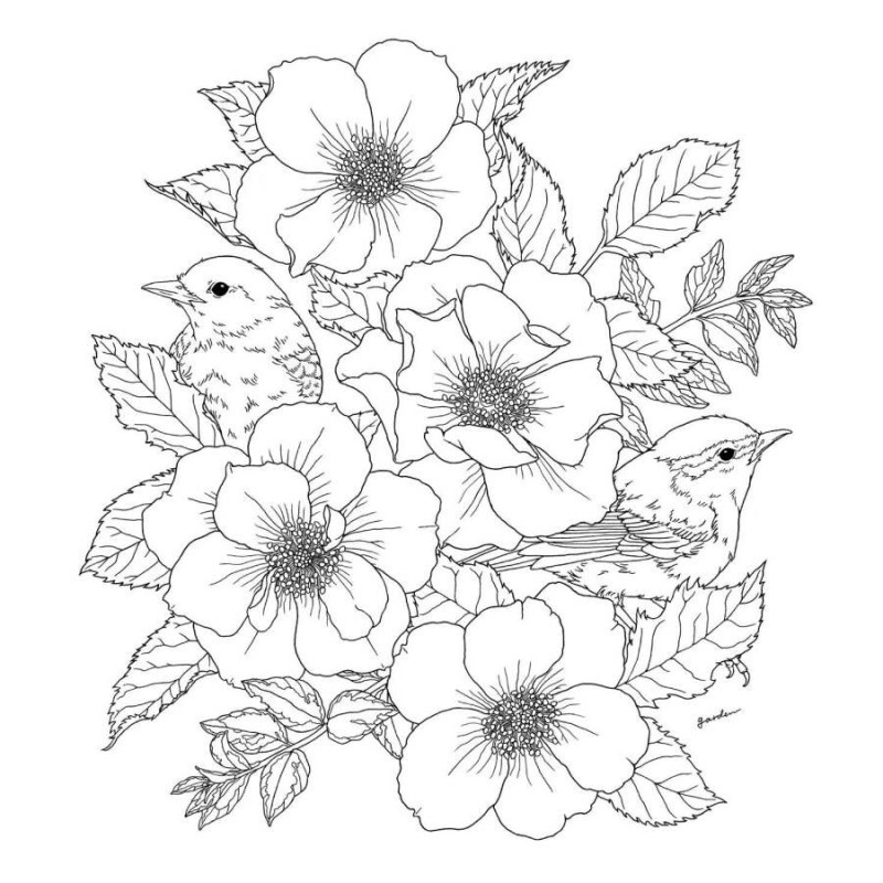 800x800 96pages Flowers And Birds Paradise Coloring Book Relieve Stress