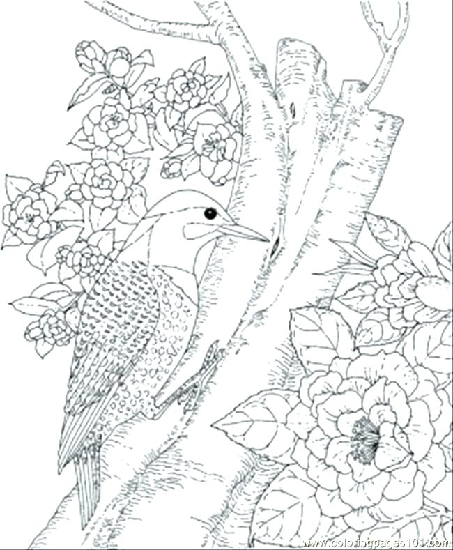 650x789 Free Printable Coloring Pages Birds Coloring Page Bird Free