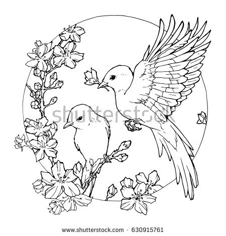 450x470 Pictures Drawings Of Flowers And Birds,